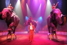 Press review  / Talents & Productions is an international talent agency and show agency specialized in all type of circus, magic, variety acts and shows for your events, TV shows, circuses, theme parks, ... We have a wide range of artists: acrobats, jugglers, comedy acts, magicians, german wheel acts, chinese pole acts, close-up magician, rola-bola, handbalance acts, trampoline, teeterboard, illusionists http://www.talents-productions.com -