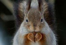 Squirrel ! / by Cari Summer