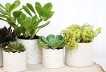 DIY ⇻ Plants / DIYs for, with or about plants!