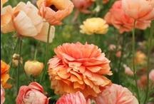 Garden Genius! / All the garden inspiration I can get.