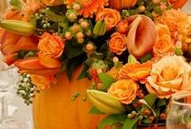 Autumn Love / All this autumn. I love fall. Fall colors.