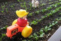 Garden / Gardening and yard ideas