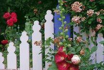 Cottage Flowers / Cottage Gardening