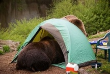 camping cool / by Dawn Badeau