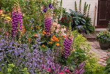 Outside / Gardening / by Nicole T