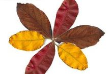 Autumn Play and Learning / Play, learning, art and craft ideas for Fall!