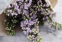 b l o o m s / flowers always bring joy