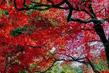 Les arbres / #arbre #tree #arbres #trees