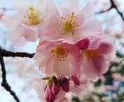 Le printemps / #Le printemps #printemps #spring #boutons de fleurs #blossom #fleurs #flowers