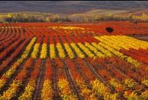 Wine Places / The beautiful and fascinating places where wine comes from.