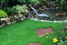 backyard / by Kimberly Johnson