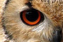 It's In The Eyes!