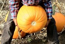 Pumpkins /  A wide selection of Pumpkins, Squashes and Gourds