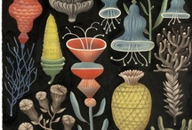 Botany and gardens