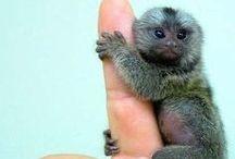 adorable!!!!