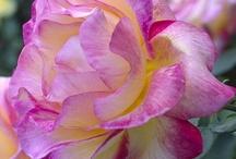 flowers / by Deanna Smith