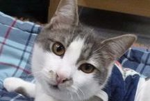 Friends of Felines Rescue Center / Vote for the Kitties!