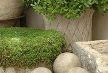 g r e e n e r y / Adding dimension and improving air quality with fresh greenery in your home