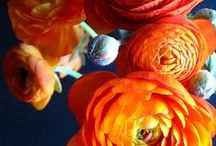 wedding flowers / Navy and persimmon / by Amber