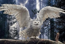 Winged ones