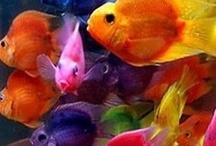 Swim thru ur veins like a FISH in the sea / by Karen McCann Rife