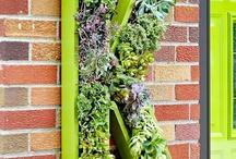 Gardens / by Michele Makowski-Fielder