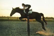 .equestrian. / by Abigail Sahm