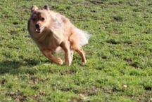 My Dog / My Beloved Dog Chewbacca Da Motta Dahl