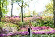 New York Botanical Garden - Bronx, NY