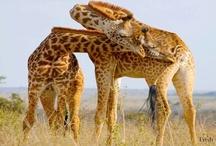 Botswana Culture & Safari Guide
