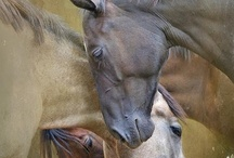 Equine Beauties / There is something about the outside of a horse that is good for the inside of a man.  ~ Winston Churchill