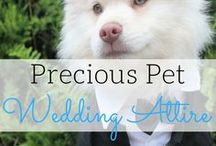 Pet Wedding Attire / Best destination wedding travel agent per our WeddingWire client reviews! Now your best friend can also be an intimate part of your wedding! Find some inspiration for the best attire for your pets including bow ties, tuxedos, dresses and more. Visit our Pinterest boards for tips, and chat with us at www.blisshoneymoons.com.