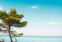 Vacances Bleues, le Groupe / Vacances Bleues séjours individuels et voyages Groupes, Classe Affaires et Voyager Autrement
