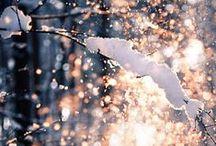 Winter Wonderland  / All things winter  / by Casey Grenet