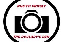 PHOTO FRIDAY at THE DOGLADY'S DEN / Weekly photography challenge and link-up: http://thedogladysden.com/category/blog-hops/photo-friday/ / by THE DOGLADY'S DEN