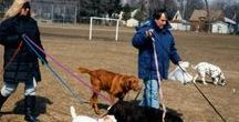 AtoZChallenge 2016 | DOG BREEDS & ANECDOTES | THE DOGLADY'S DEN / DOG BREEDS & ANECDOTES from A toZ