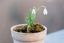 Garden / Time began in a garden... / by Trisha Brink