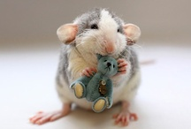 Rats! / by Anna Høychuk