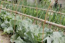 Edible Garden / Grow it yourself!