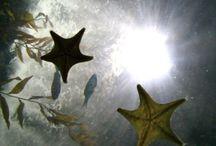 Mermaid | Sea Lore / иαυтι¢αℓ мутн & α∂νєитυяє. ѕєαѕнσяє / ∂єєρ ѕєα ιиѕαριяαтισи