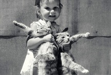 cat / furry and not so furry / by Joan Martin