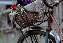 All Things...Bicycles / This wonderful, versatile mode of transportation comes in all sizes, colours, designs and is used for pleasure, exercise, or work. Enjoy! / by Bev Wittig