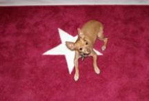 Pets on the Red Carpet