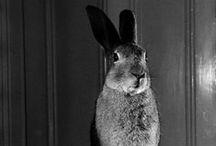 Carla  / Tolle Tiere / by DFM HAMBURG