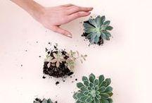 Flora. / by Nicolette Mason
