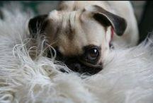 Pug Life. / by Nicolette Mason