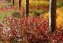 Low deciduous shrubs, native to WI, recommended by UW Extension