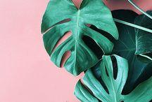 INTERIORS// FOLIAGE / Foliage