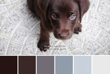 l SHADES OF ANIMAL, PAINT COLOURS l / Colours of the animal population
