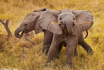 Elephants / by Alissar Taremi